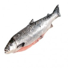 Salmon fresh Fish 1kg